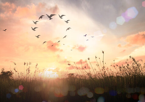 International human solidarity day concept Silhouette birds flying in s